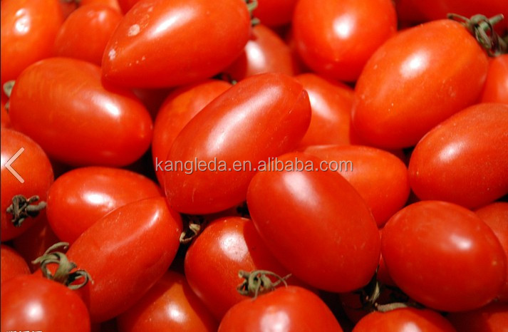 Good Quality Dry Fruit Cherry Tomato Made in China