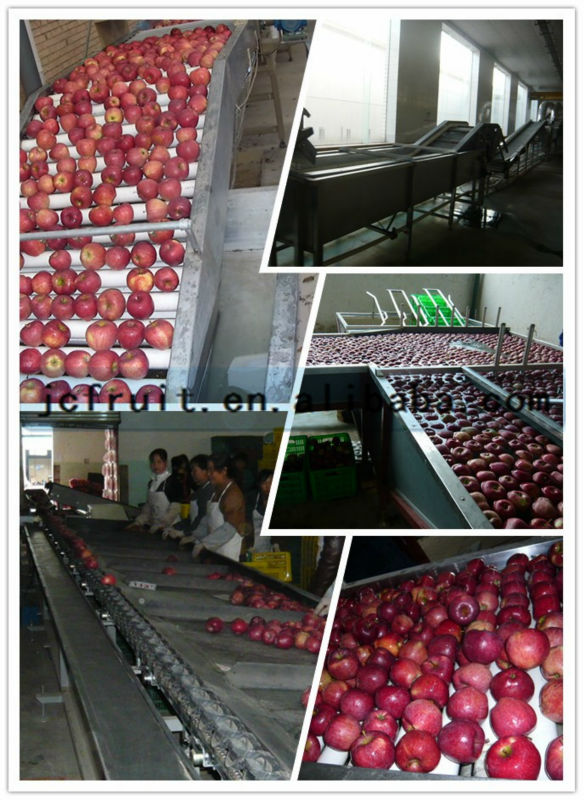2014 High Quality Fresh Honey Fuji Apples