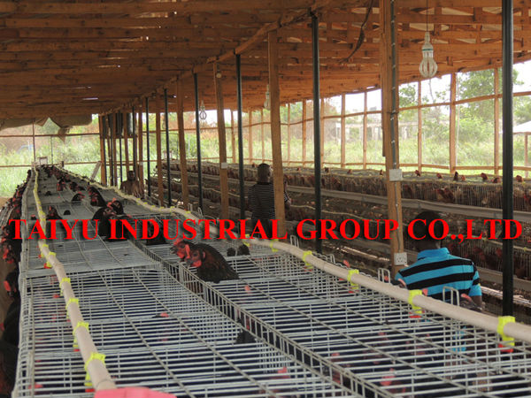 taiyu poultry house design for layers in kenya farm buy
