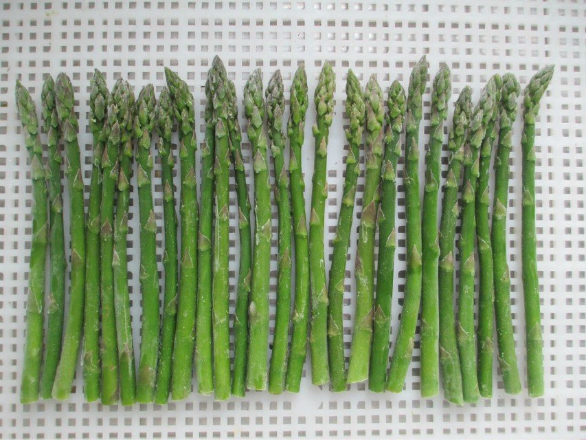 Frozen fresh green beans competitive price