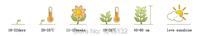 50 шт / мешок, семена Калла лилии каллы, горшке семян, семян цветов, разнообразие завершить, многообещающий курс 95