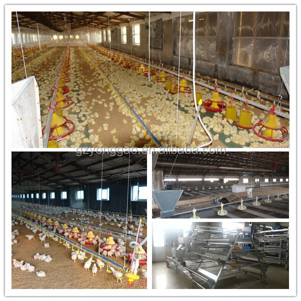 Automatic poultry feeding system for Chickens and Ducks Feeder&Drinker System