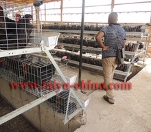 TAIYU Foreign Agent A Type 3/4 Tiers Poultry Cage for Layer Visit Customers Every Year