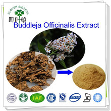98% linarin High Quality natural Flos Buddlejae extract