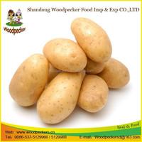 China new fresh potato distributors