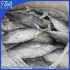 frozen bonito fish flake steak on sale