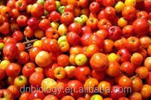 cherry & Acerola cherry Powder cherry extract/dried cherry powder/natural acerola cherry extract