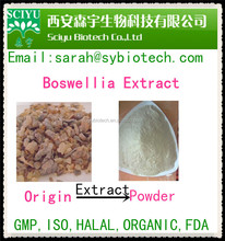 Hot Sale Mastic gum extract