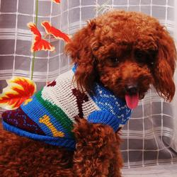 latest pet clothes dog factory sales(Accept custom)