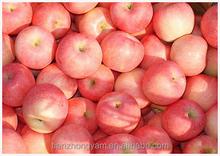 2014 New Crop Chinese Apple Fuji Apple