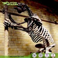 Artificial Animal Skeleton Replica