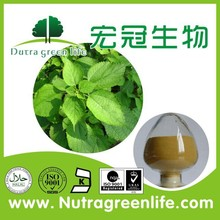 Manufacture Supply Nettle Extract Use In Nettle Tea