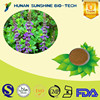natural herbs extract powder 10% Forskohlii / Forskohlii Extract Powder/Coleus Forskohlii Extract Powder for health food