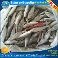 New stock frozen food !frozen horse mackerel ,frozen fish horse mackerel