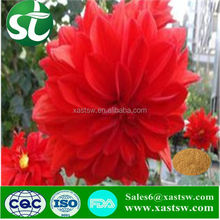 Red Clover Flower Extract Supplier