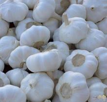 chinese fresh garlic manufacturer supplier
