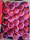 apple tipo e pomóideas tipo de produto orgânico shanxi maçã fuji