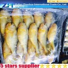 nueva llegar toda la ronda croker amarillo de pescado para la venta