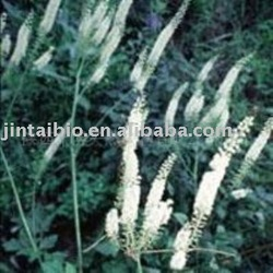 Hot sale Plant Extract Black Cohosh P.E.
