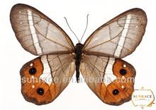 artificial vuelo de la mariposa de nylon bandas para la cabeza decoraciones