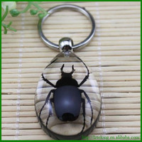 Resin Real Insect Specimen Promotional Real Bug acrylic keyring amber