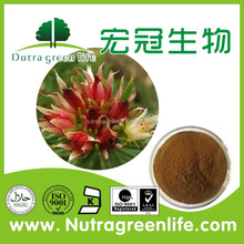 Top Quality Rhodiola Rosea Extracts powder bulk price