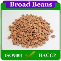 85pcs-110pcs/100g Direct Factory Price Broad Beans Bulk For Sale Shell Dried Broad Beans From China