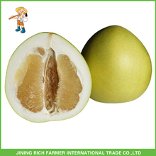 Factory Price Chinese Fresh Sweet Honey Pomelo For Export