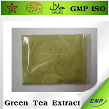 bnp suppliers pure bio green tea extract