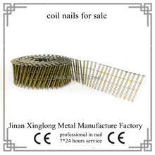 Factory supply cap volume coil nail