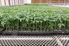 72 cell plastic seed germination tray for agriculture