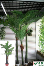 exotic coconut palm tree decoration garden