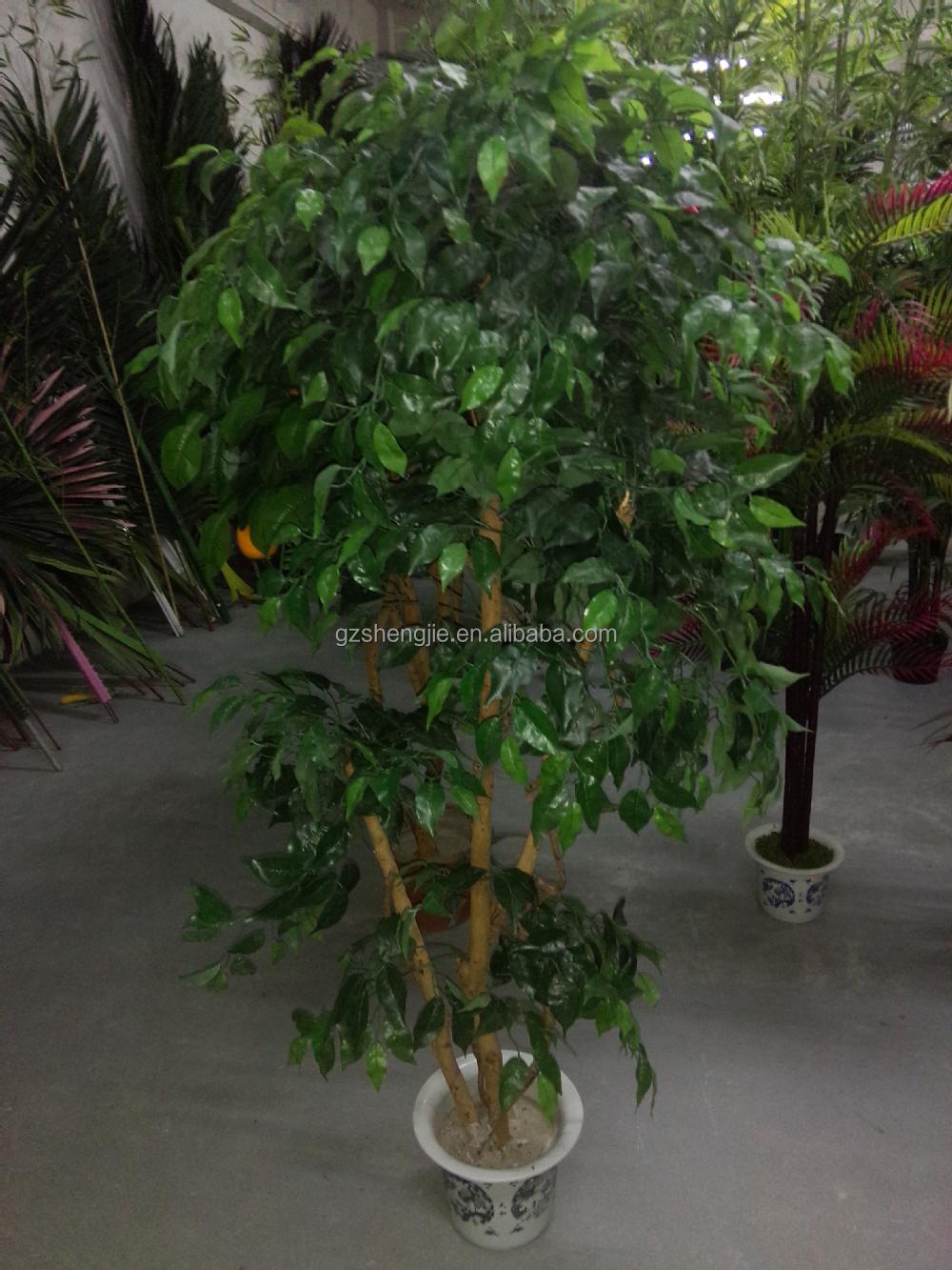 Y26 gebruik voor binnen decoratieve miniatuur banyan boom, levende ...