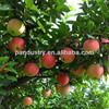 Factory direct Supply Mango fertilizer Ethephon Fruit ripening ethephon