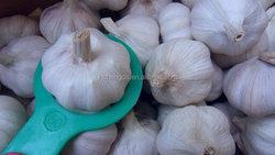 fresh garlic 5.0com packing in 10kg carton normal white garlic