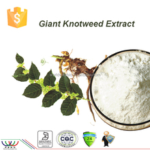 free sample HACCP KOSHER FDA certified manufacturer China herbal medicine 98% resveratrol giant knot weed extract