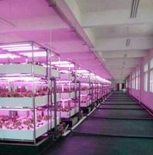 daisy chain design led grow light, t8 led grow tube light 20w 450nm 660nm