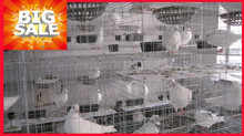 4 tier 4 door bird cage for sale/cheap price pigeion breeding cage wire mesh with high quality made in china
