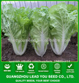 KC03 Bobang crecer rápido semillas pak choi híbrido f1, semillas de col china
