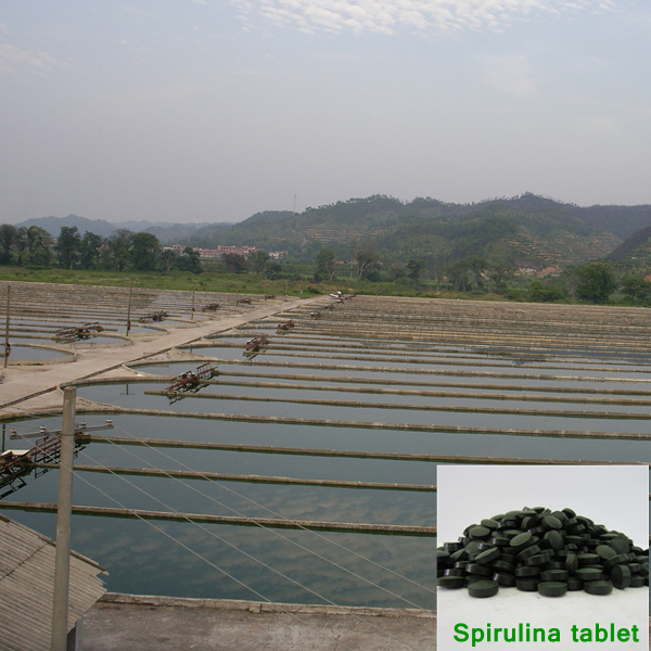 Organic spirulina tablets
