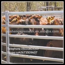 Australian popular XM 8'L x 6'H 6 rail horse cattle panel fence(hot galvanized/anti-aging)