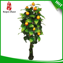 Hot selling indian fruit trees