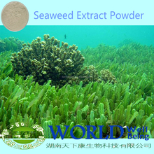 100% Natural Organic Kelp Powder Kelp Seaweed Extract Powder 20% Polysaccharide Kelp Seaweed Powder