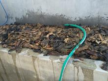 Seaweed Plant Growth Regulator