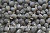 Black Matpe Bean