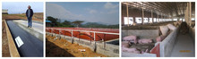 High gas production biogas plant for converting pig manure into electricity