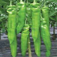 Qing la jiao zhong zi top level New-bred Sweet Cherry Pepper Seeds