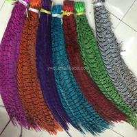 dyed zebra pheasant feathers