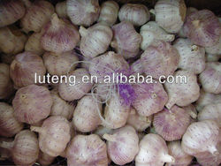 normal white garlic price