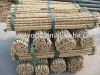 natural bamboo root, bamboo root cane, bamboo rhizome for bag handle